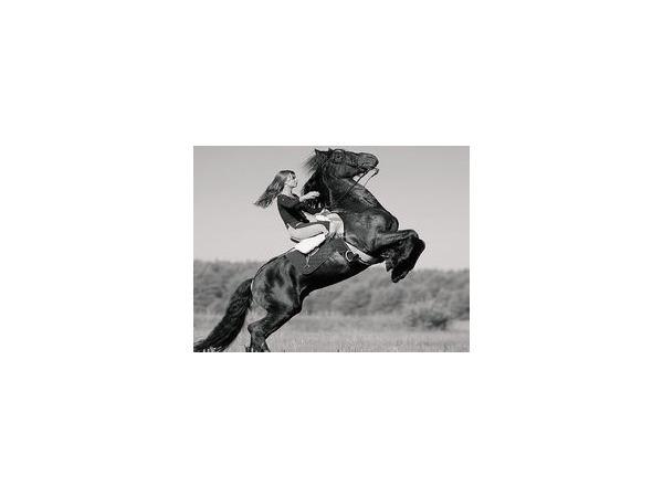 Лошадь: далекая и близкая. Цена вопроса и особенности ухода