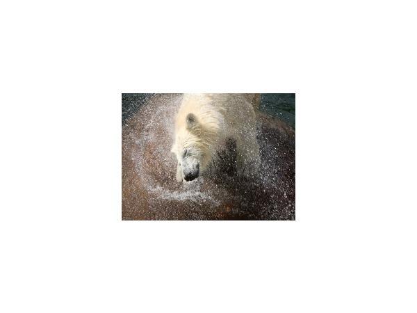 Душ и мороженое: зверей в зоопарке спасают от жары