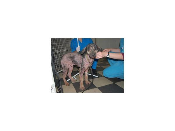Детский офтальмолог не смог помочь собаке