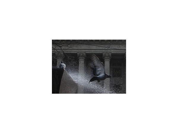Неотлаженный городской фонтан пернатые превратили в душ Шарко