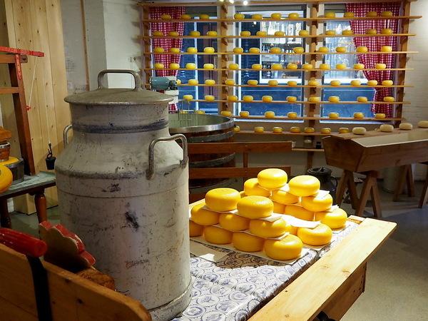 Под Петербургом построят сырную деревню