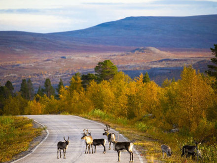 Будущее финских дорог: заплатят все