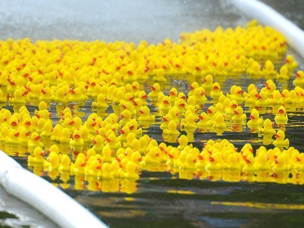 Благотворительный утиный заплыв поможет детям