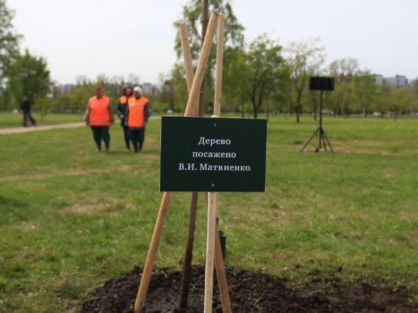 Патриарх Кирилл иВалентина Матвиенко неприехали сажать свои деревья