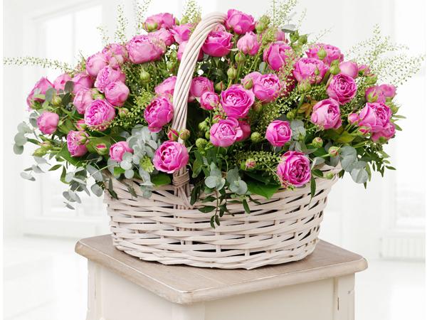 «Новая Голландия» выходит в лидеры цветочного бизнеса с новым сортом роз