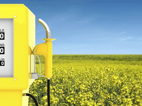 Не бензином единым: альтернативные виды топлива набирают популярность