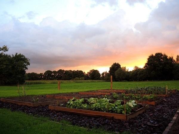 Дачи не надо! Что изменилось в законе о садоводстве и огороде?
