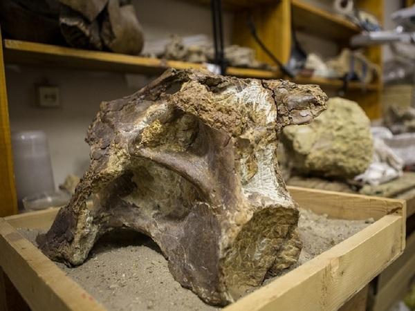 Найденный вСибири новый вид динозавров назвали сибиротитанами