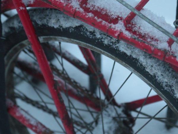 Петербуржцы не побоялись поехать на работу на велосипеде