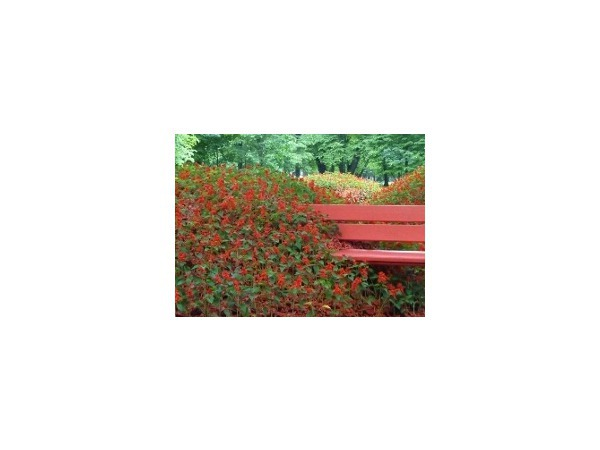 «Императорские сады России»: Вся власть цветочкам