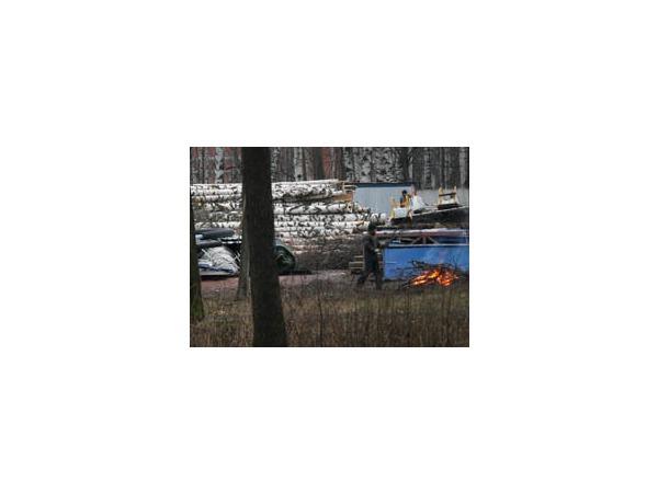 Защитники Удельного парка сообщают о новых вырубках деревьев