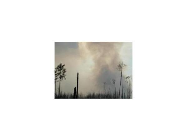 Экологи обнаружили, что запах гари пришел в Москву в пятницу из Брянской области, где в зоне чернобыльского загрязнения горит крупный торфяник