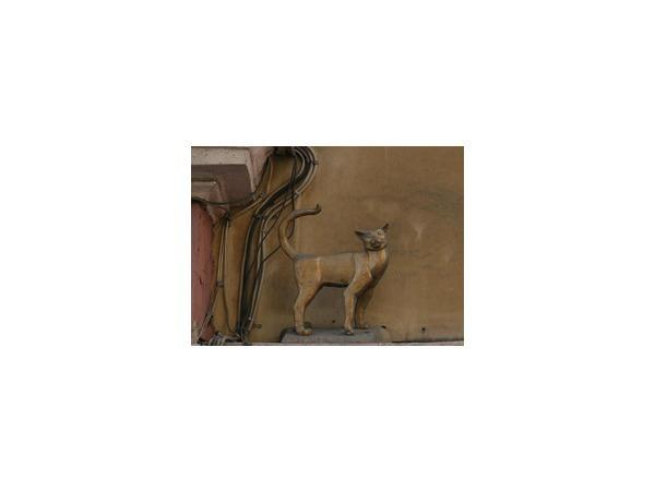 Кошку Василису могут приравнять к урнам и скамейкам