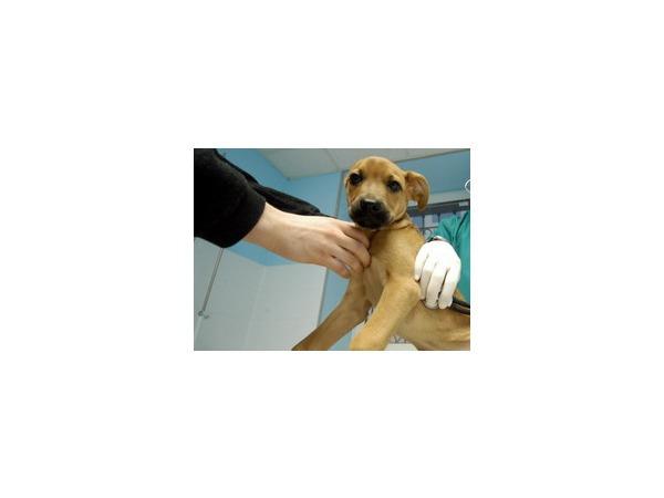 Власти Мадрида хотят усыпить собаку заболевшей Эболой медсестры