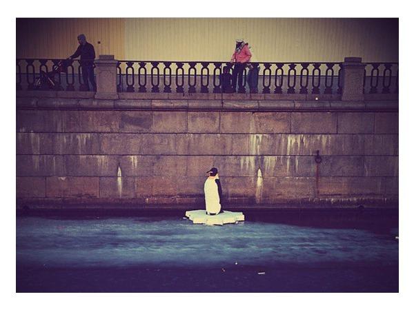 На канале Грибоедова увидели пингвина