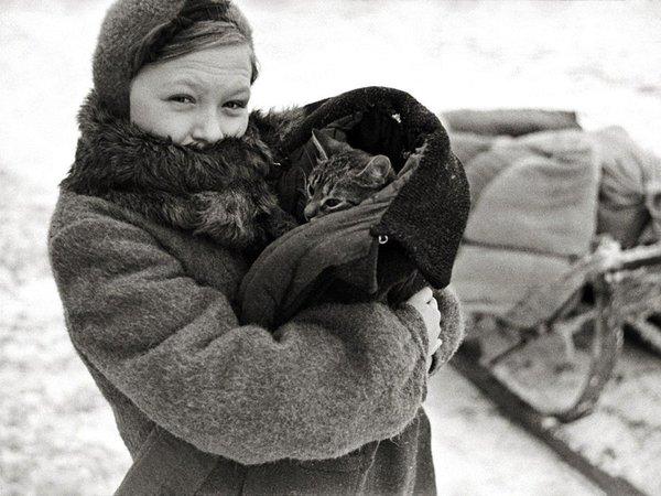 Блокада: за что Ленинград благодарен кошкам