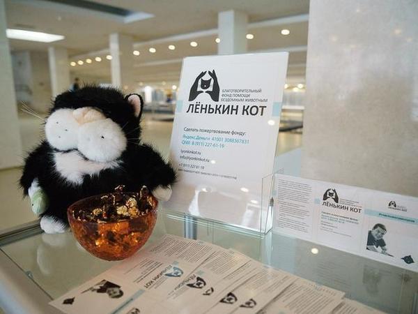 Фонд «Лёнькин кот» просит срочной помощи
