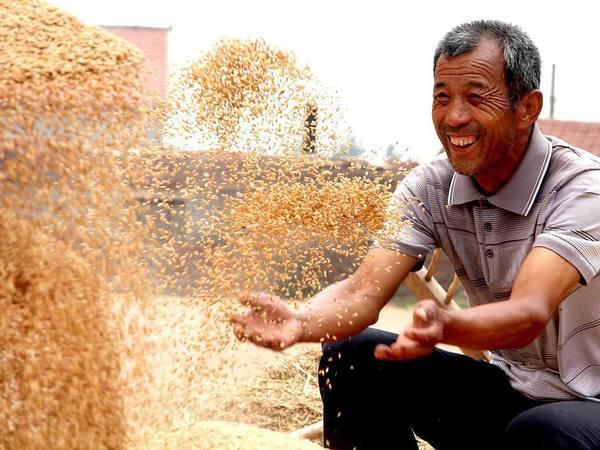 Смольный потерял военные запасы хлеба