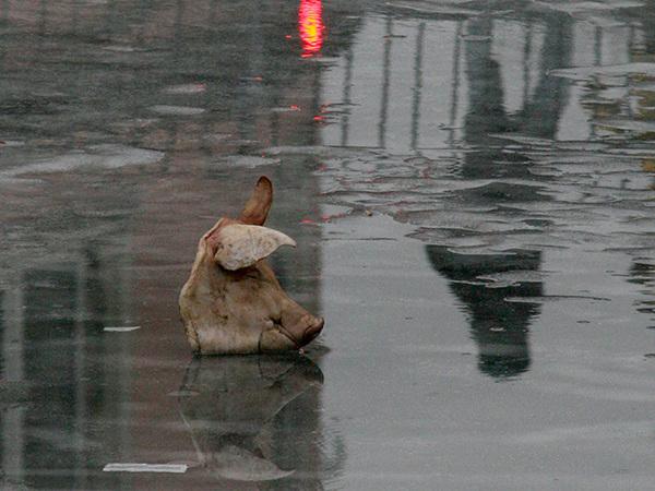 На льду Фонтанки потеряли свиную голову