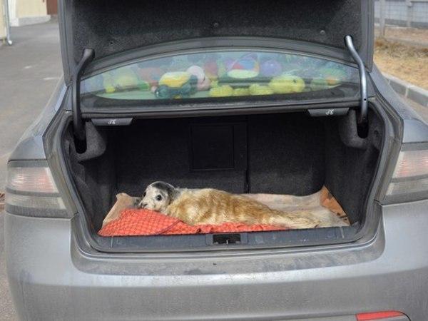 Тюлененка спасли прямо возле Морского вокзала
