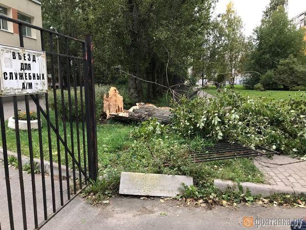 Дерево, снесшее ограду детсада в Невском районе, не могут убрать уже две недели