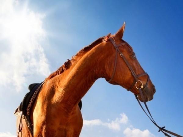 Как въехать в новостройку на коне