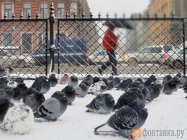 Колесов: Декабрь в Петербурге будет теплее обычного, но мы этого не почувствуем