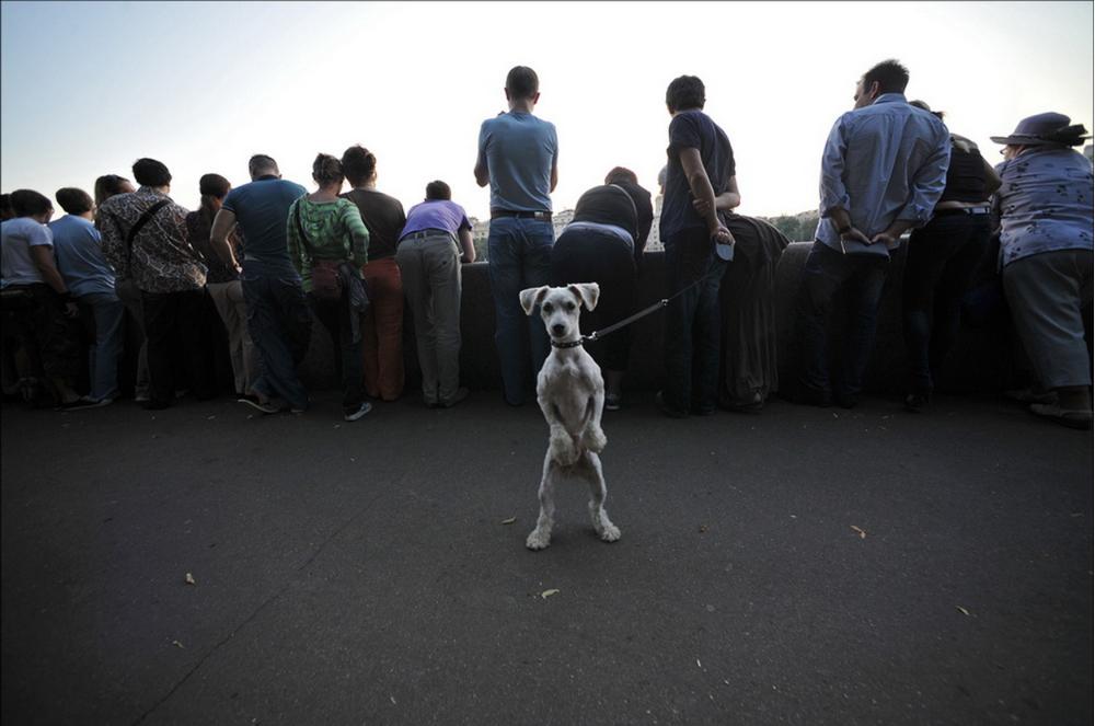 «Белая собака» Автор: Артем Житенев