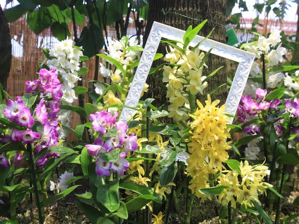 Орхидеи из закрытых фондов Ботанического сада вышли в свет
