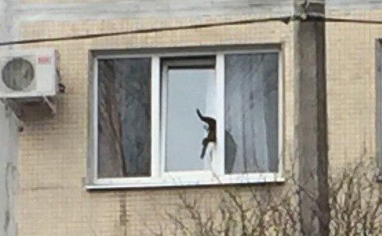 К застрявшему в окне коту в Калининском районе приехали пожарные
