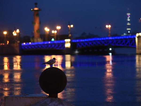 В Петербурге снова «зажгли синим»