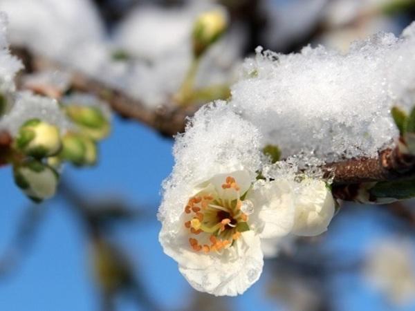 Весна закончилась в июле, но лета осенью в Петербурге не будет