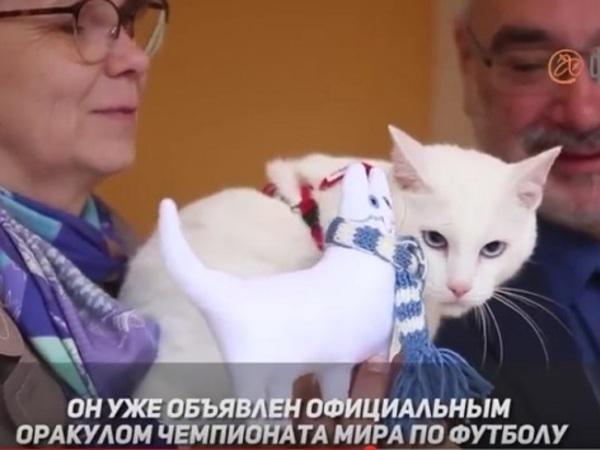 Кому достанется футбольный кот-оракул Ахилл из Эрмитажа