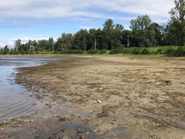 Куда ушло единственное чистое озеро в Петербурге