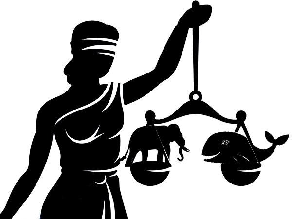 Суд рассудит Сберкита с Юлслоном