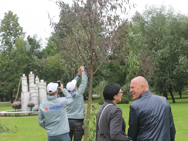 Коммунальщики сделали усохший сад Ткачей «уютным» с помощью скотча
