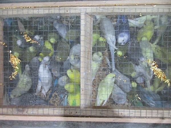 335 попугаев прошли границу в Пулково