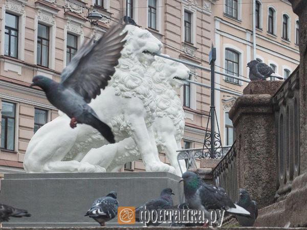 Львиный мостик на канале Грибоедова открыли после реставрации. Фоторепортаж «Фонтанки»