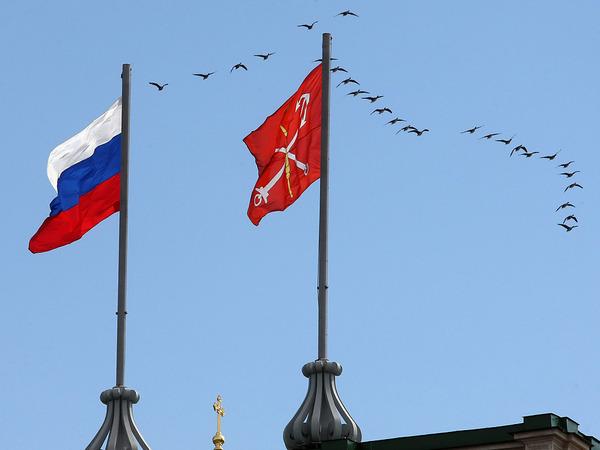 Над Петербургом летят морская чернеть, морянка и синьга
