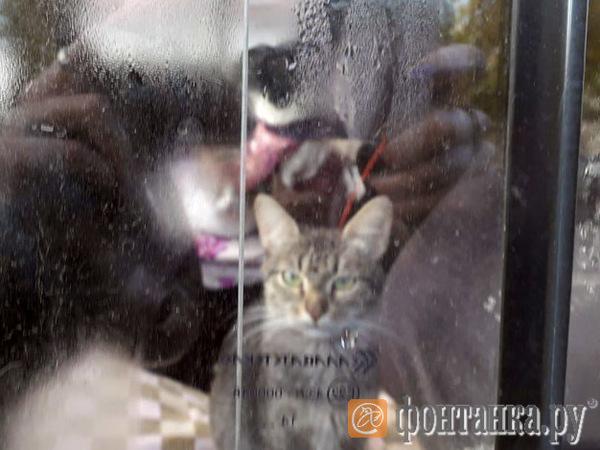 Петербуржцы пытаются спасти запертых в белом УАЗе кошек и собак. Животные без еды и воды больше суток