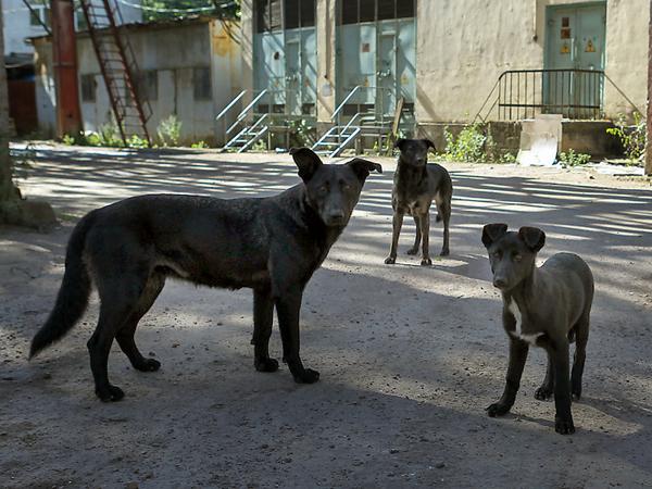 Кастрировать, и точка. Горсуд запретил отпускать на улицы Петербурга бездомных животных
