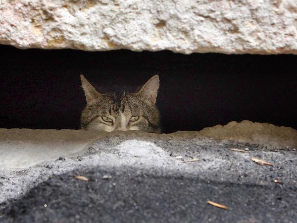 Почему бездомным кошкам в подвалах нужны опекуны