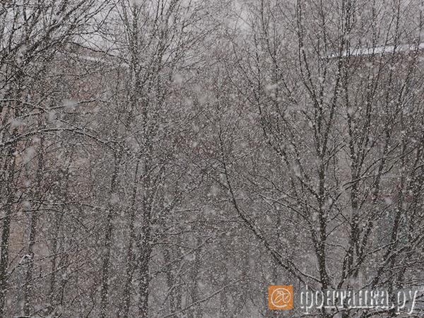 Петербург не может определиться с погодой. С севера надвигается зима, в центре и на юге продолжается осень