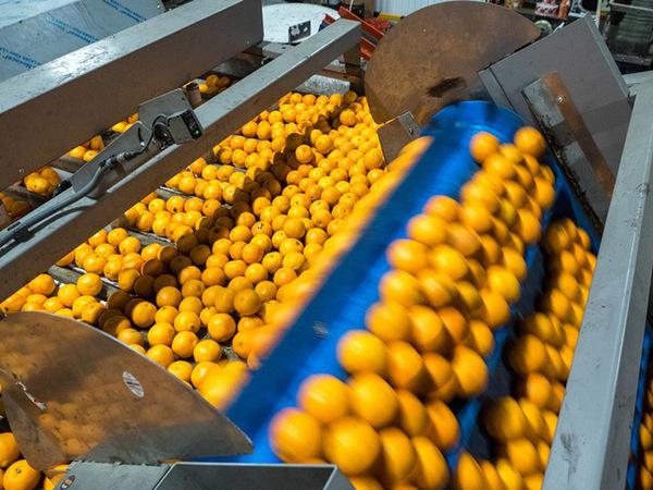 160 тысяч тонн цитрусовых на новогодний стол России. Кто и за сколько обеспечит страну фруктами
