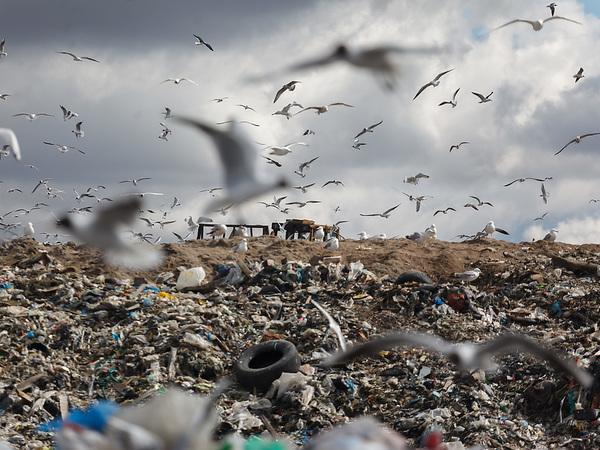 Куда Петербургу вывезти мусор