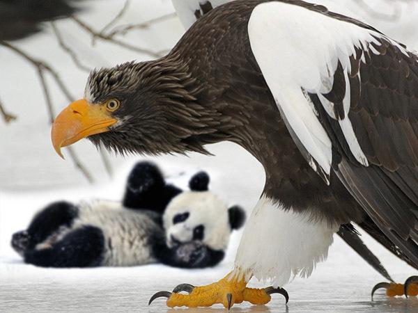 Сцепились панда и орел, а пострадает Россия