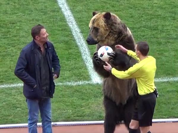Медведь открыл матч третьего дивизиона российского футбола