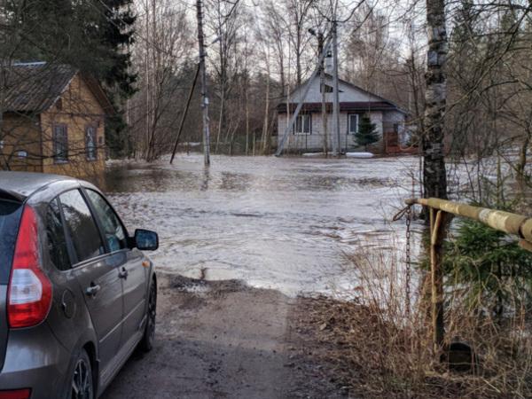 В Сестрорецке большая вода залила садоводства