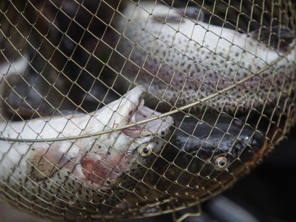 Запрет наловлю рыбы будет действовать вПетербурге