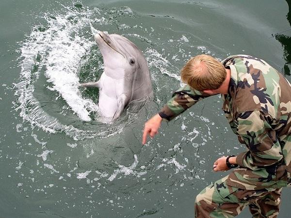 Крымский мост может «завербовать» боевых дельфинов для Севастополя